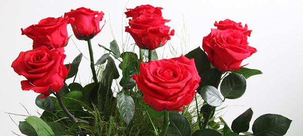 Ý nghĩa hoa hồng đỏ là gì