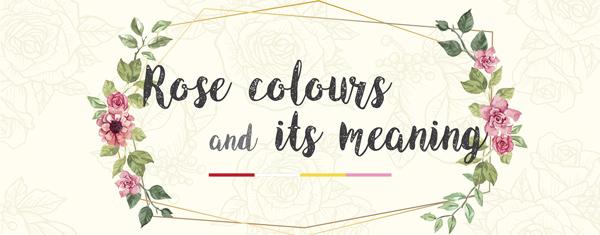 Màu sắc của hoa hồng: Ý nghĩa của chúng là gì?