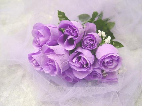 ý nghĩa hoa hồng tím là gì